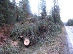 treesdown1