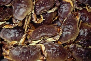 Dungeness crab. Photo/ADF&G
