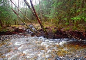 Photo of Ohmer Creek from USFS November 2016 Record of Decision