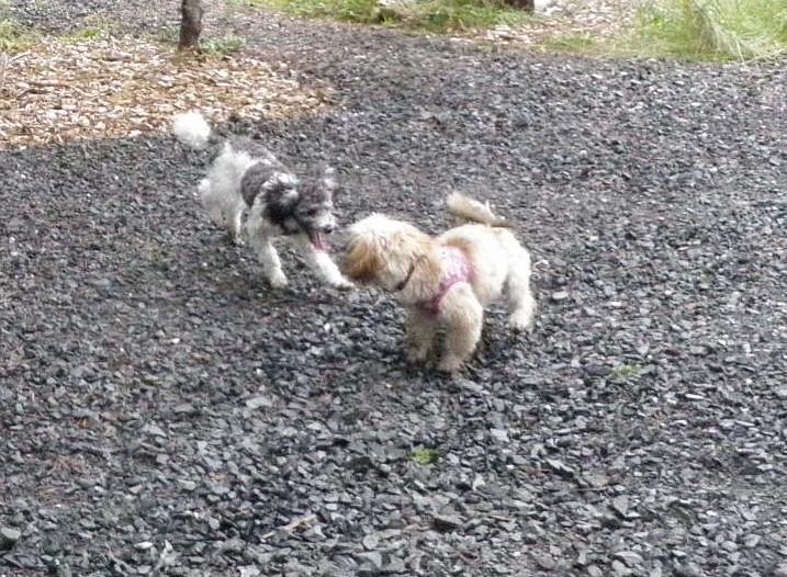 Humane association opens park for little dogs