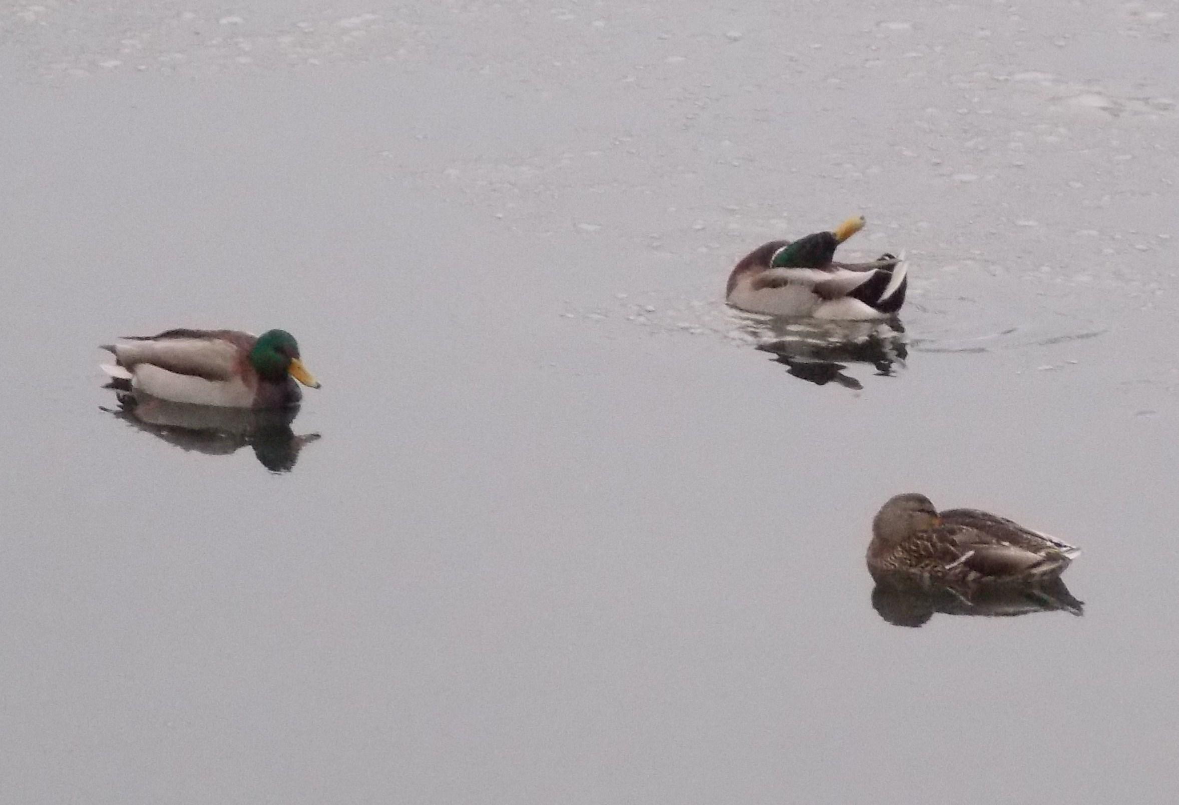 Volunteers continue Audubon bird count around Petersburg