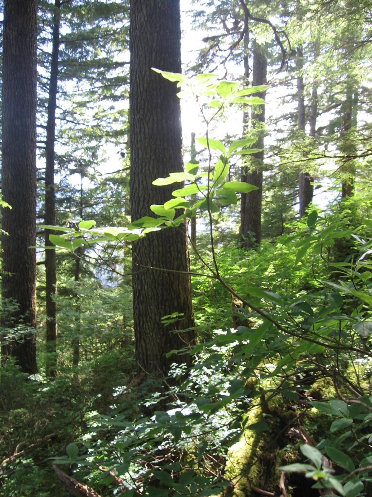Alaska's roadless forest challenge dismissed