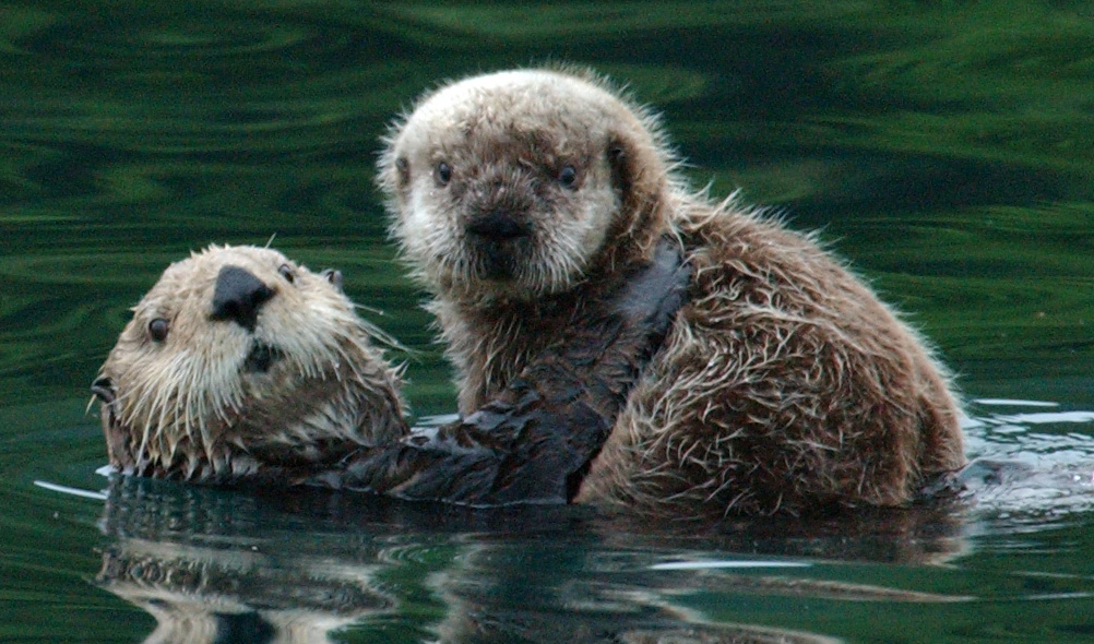 Draft SE otter population assessment out