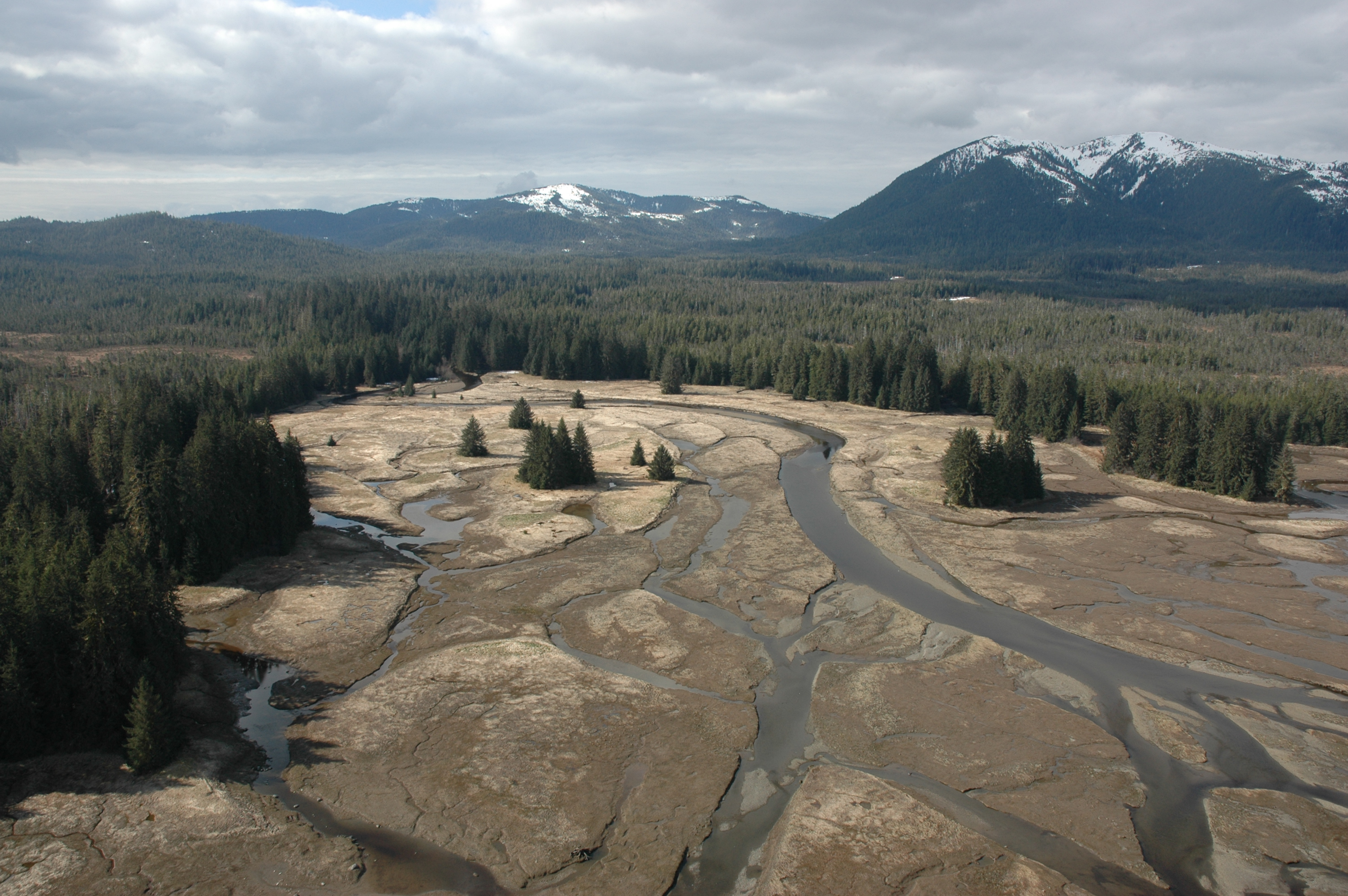 Scientists call for greater protection for Tongass salmon streams