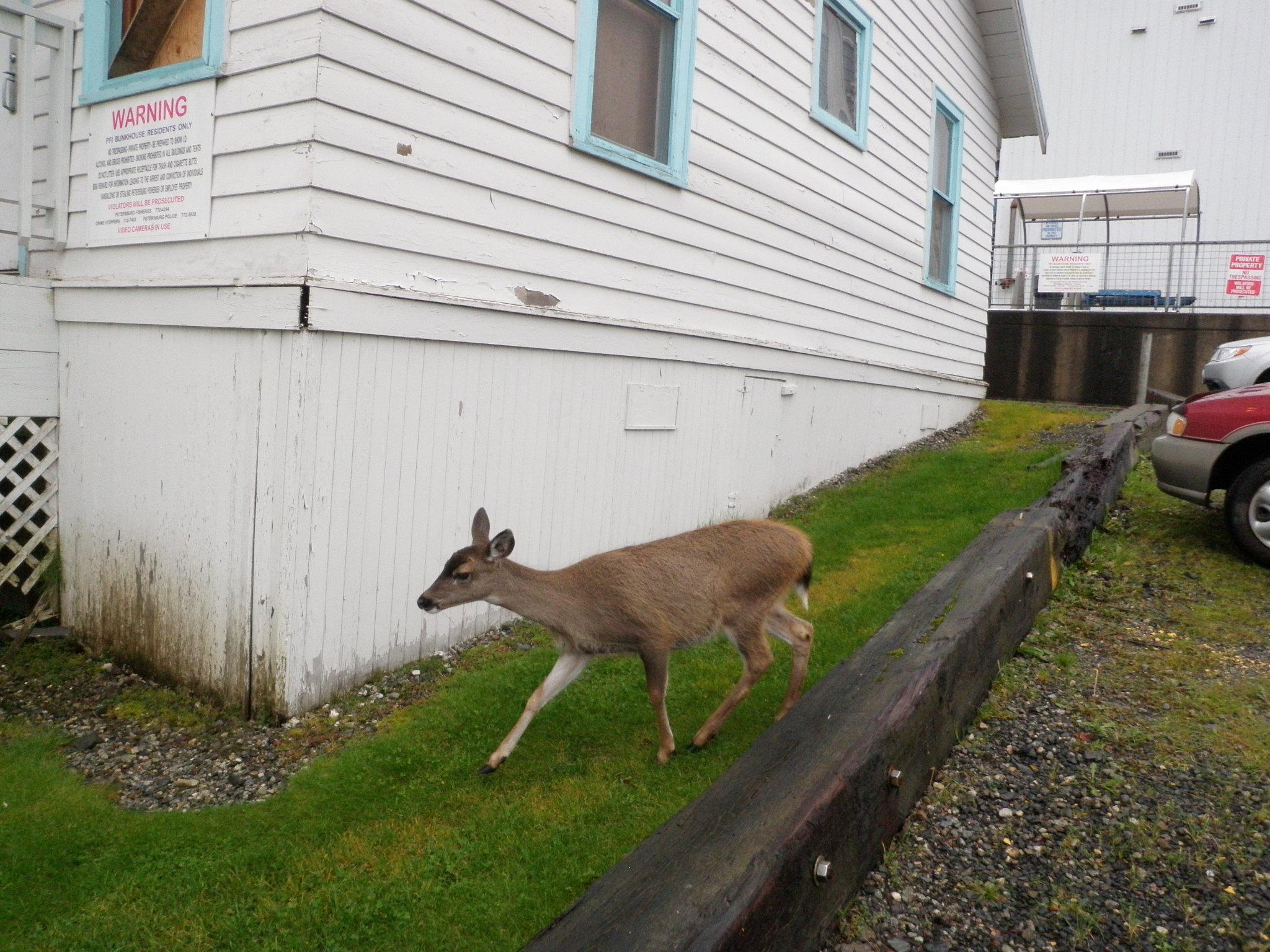 Another deer season change sought for Lindenberg Peninsula