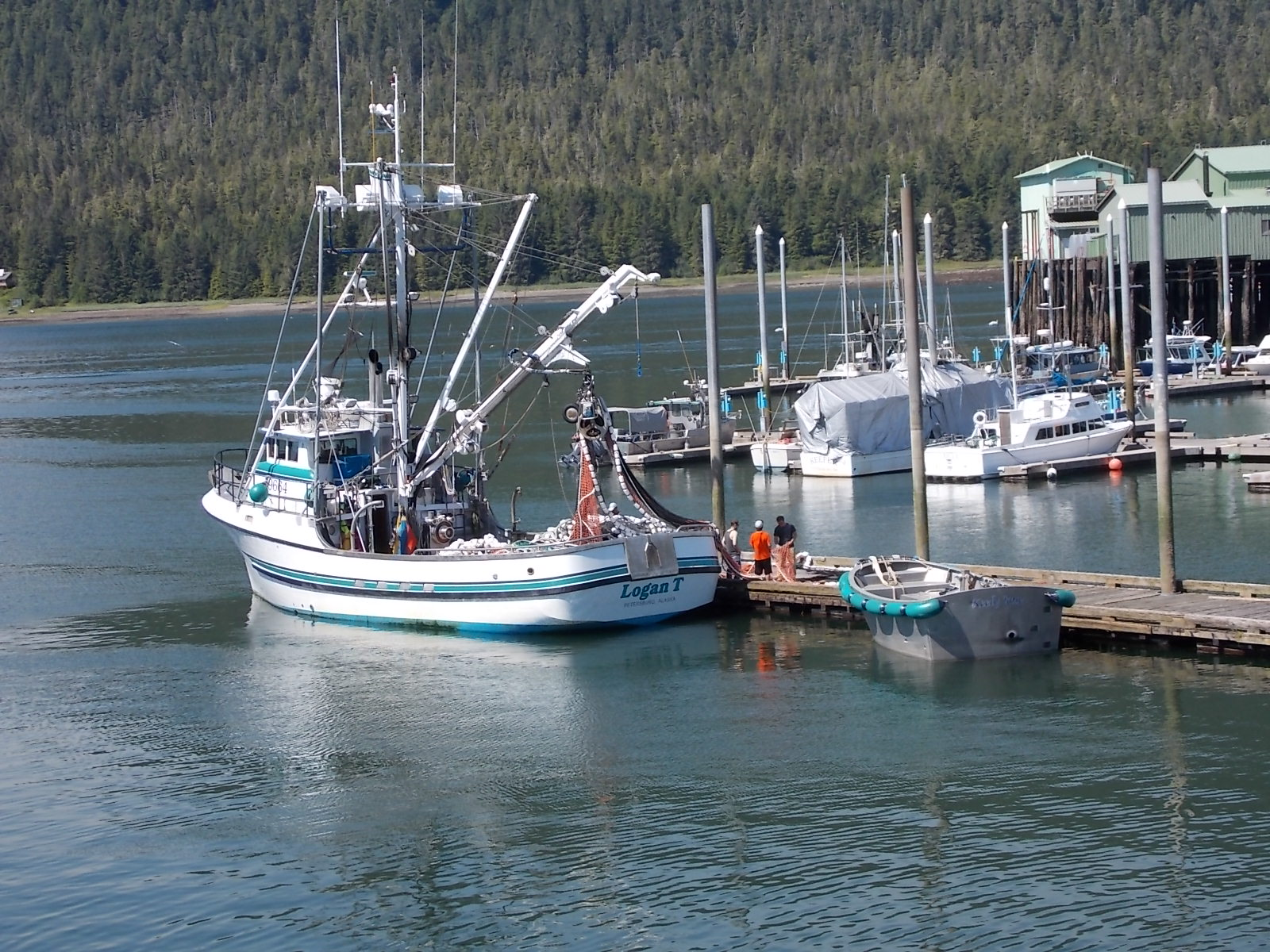 Region's commercial net fisheries hauling in early chums
