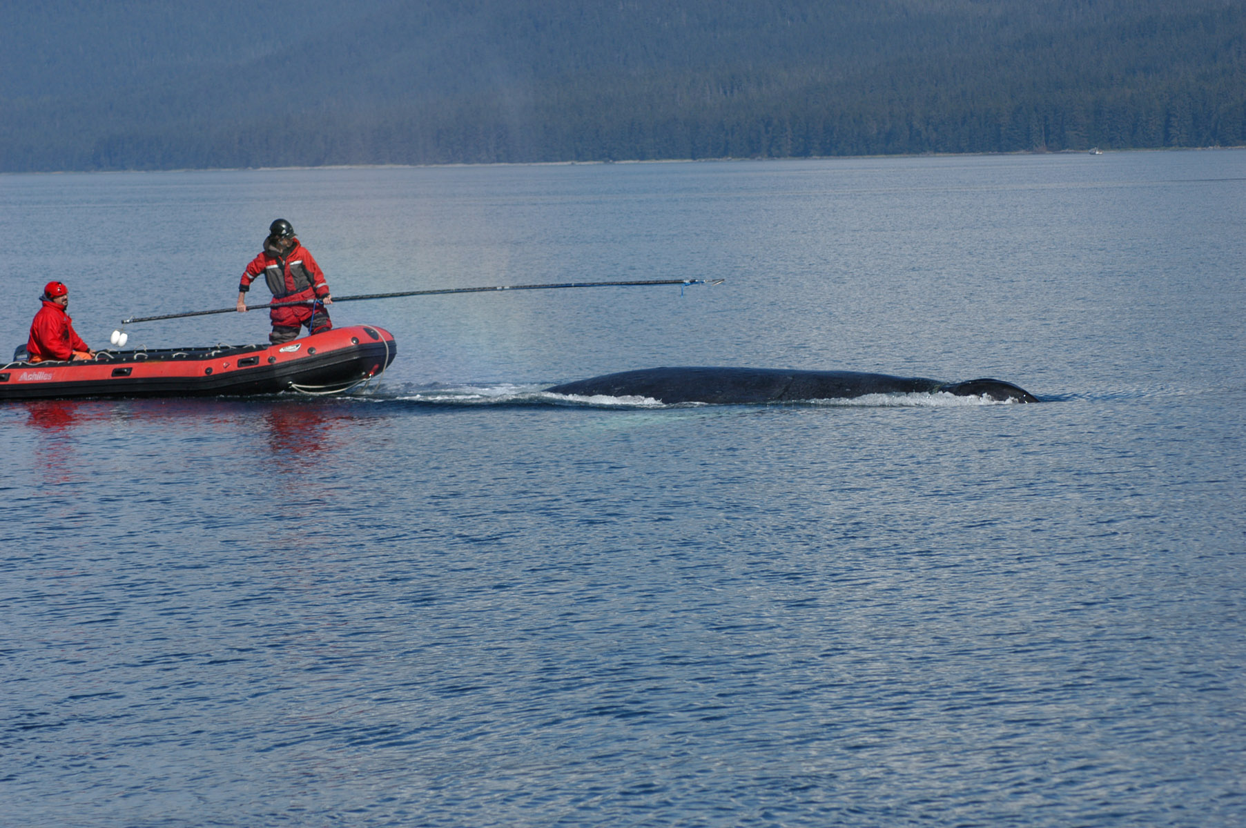 "NOAA ends whale disentanglement effort, says whale appears ""robust"""