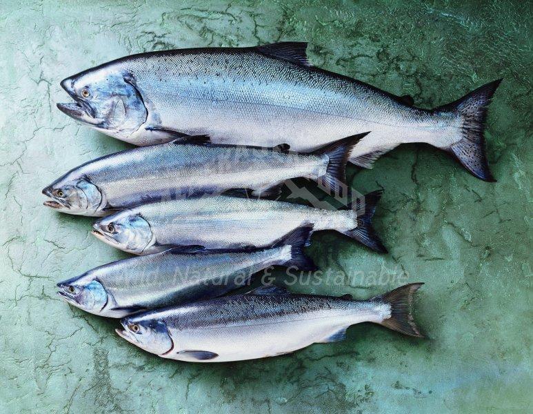 Photos sought for Alaska seafood marketing