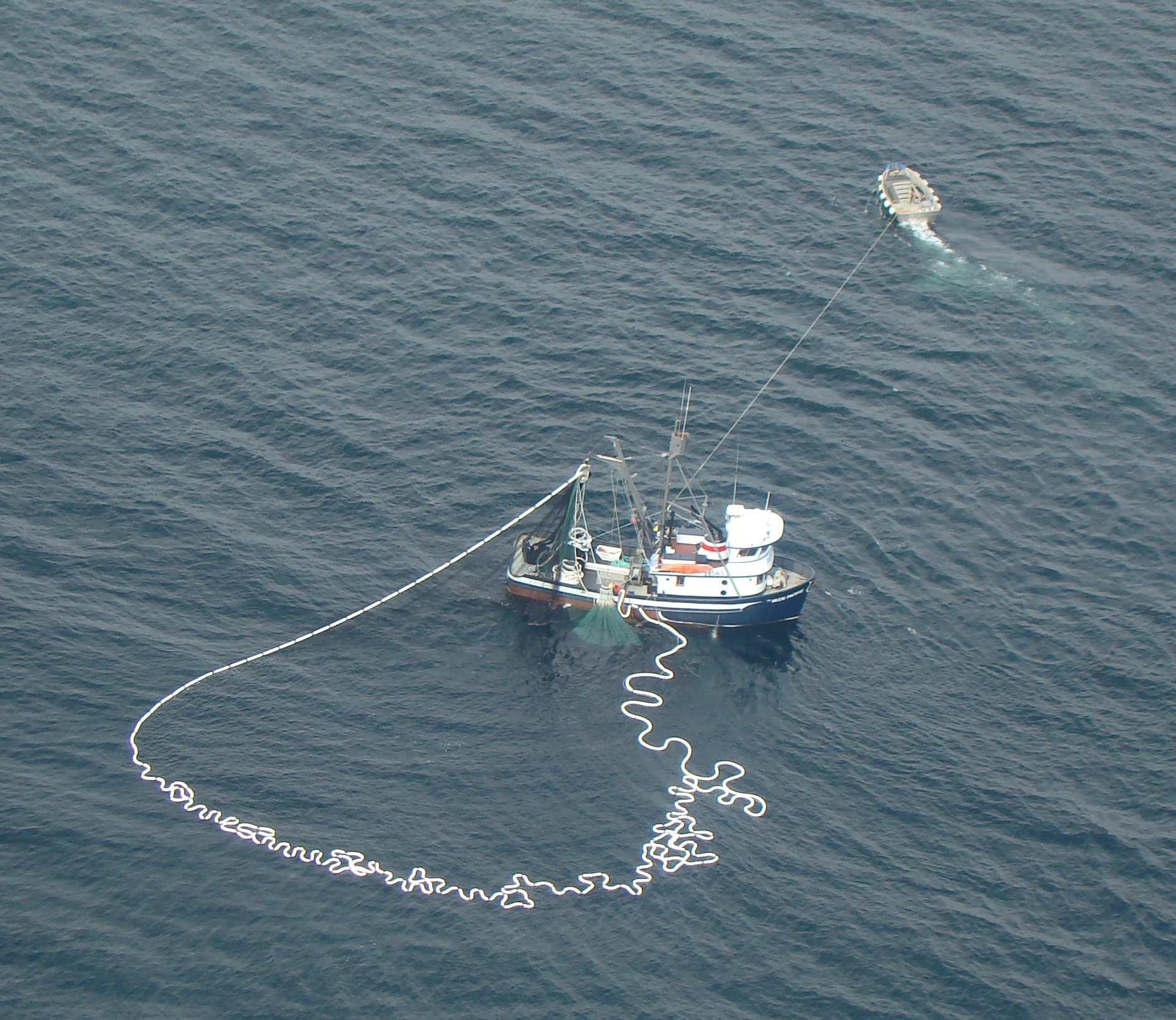 Southeast seine fleet catching pinks, missing chums