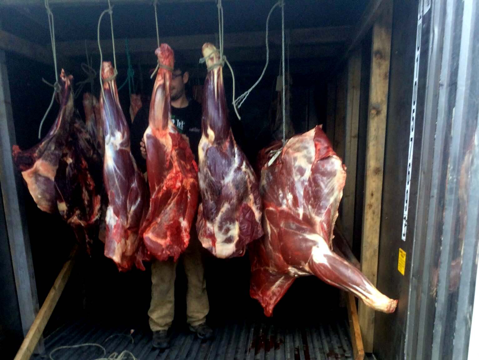 Illegal moose meat distributed in Petersburg