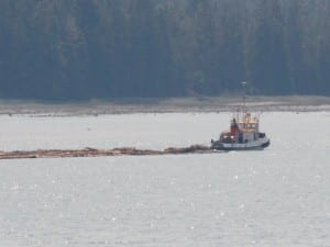 A tug pulls a log raft down the Wrangell Narrows near Mitkof Island in 2013. (KFSK file photo)