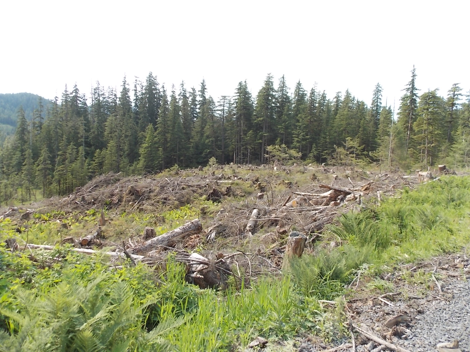 Locals fault forest plan for impacts to deer, salmon habitat