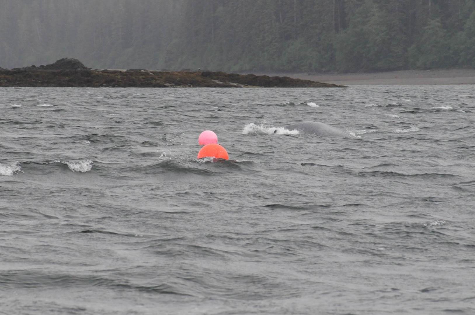 Ocean Tuesday: Capturing Value from Alaska's Ocean Resources