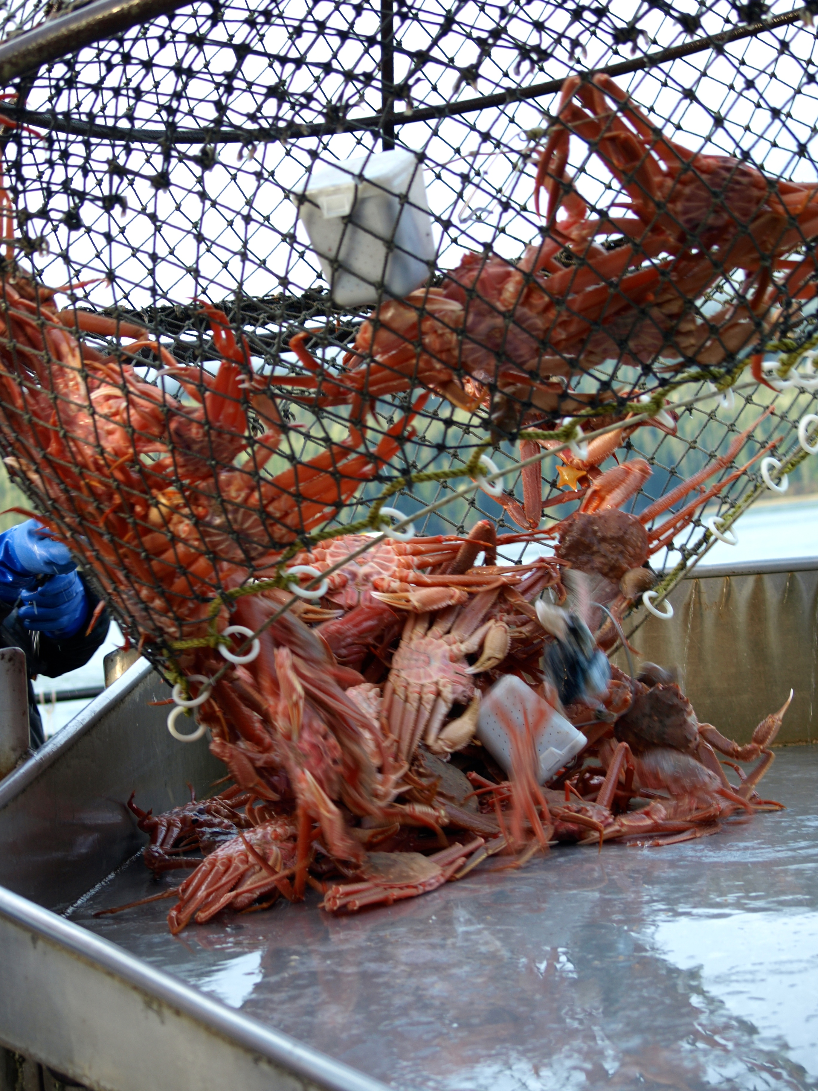 Southeast's first crab fisheries of the year set to open