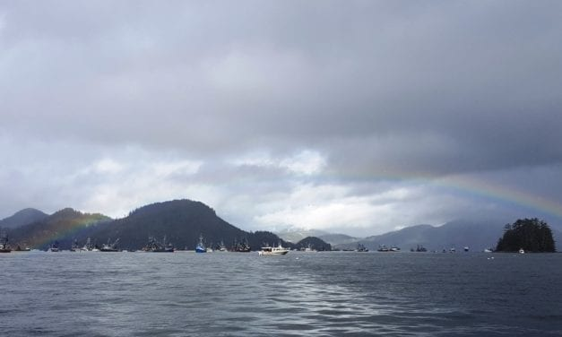 Sitka sac roe herring fishery close to being over