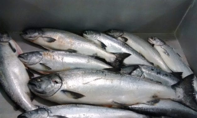 Southeast Alaska spring troll fishery shut down for lack of king salmon