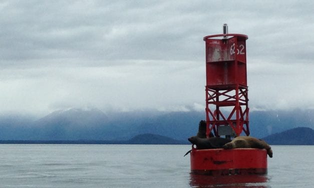 Business as usual for marine mammal deterrence