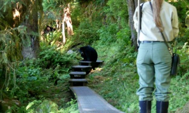 Popular SE bear observatory gets public safety makeover