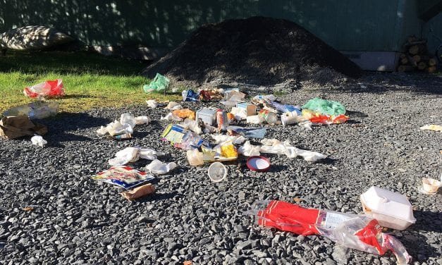 Bears in Petersburg trash a human problem to solve