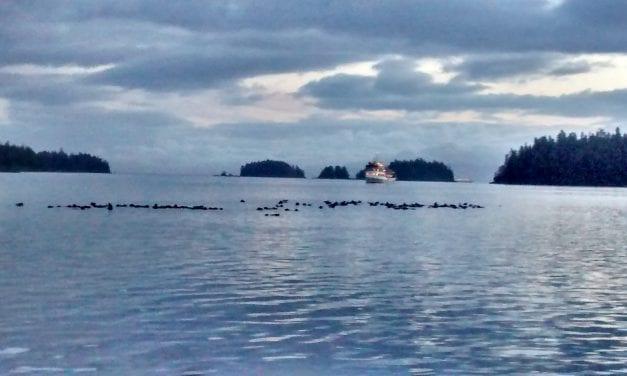 Southeast fishermen seek relief from expanding sea otter population