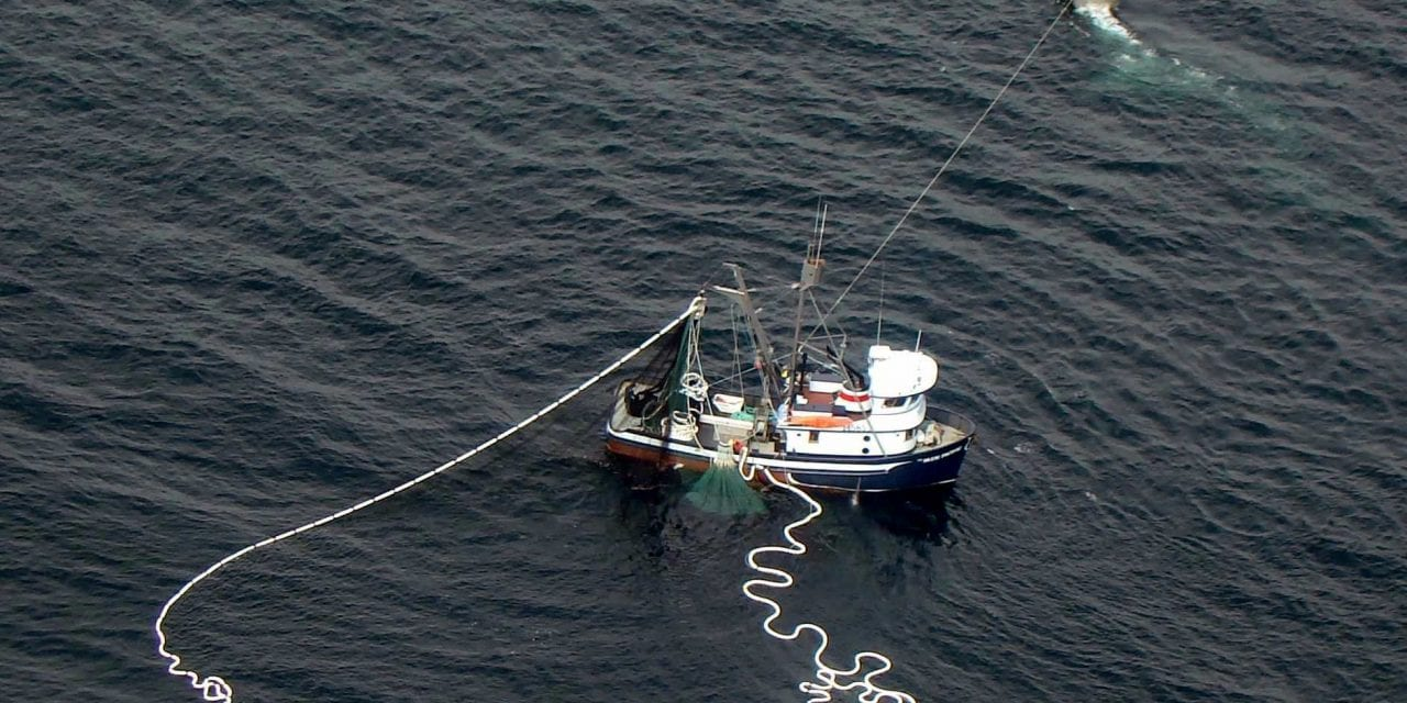 Southeast Alaska squid fishery shot down