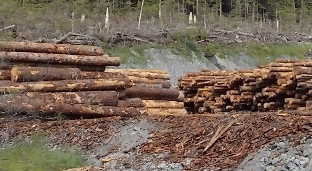 Petersburg assembly may consider resolution on timber sale losses