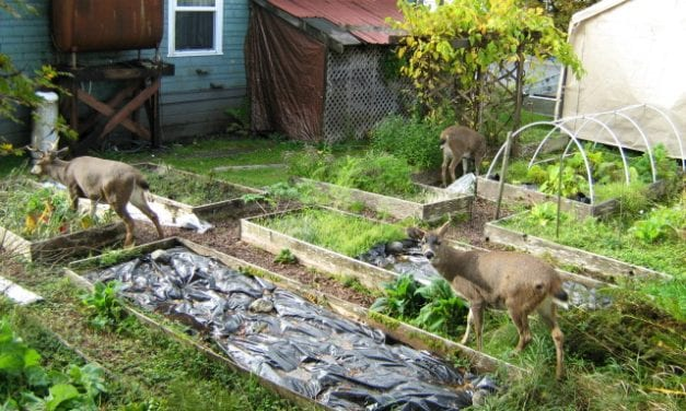 Petersburg committee supports extending local deer hunt seasons