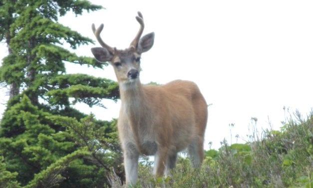 State board approves longer deer season around Petersburg