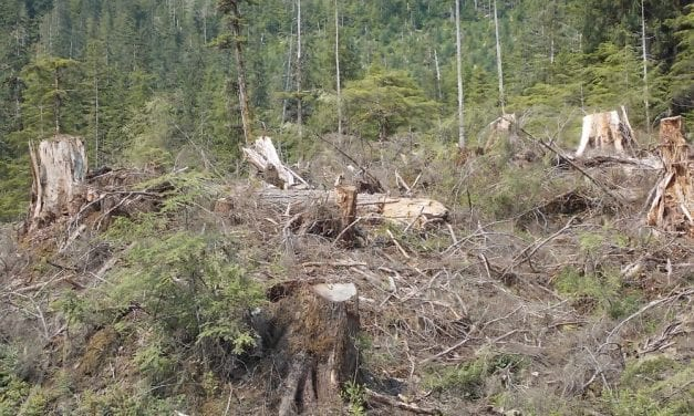 Assembly sends another letter for Tongass timber sale information