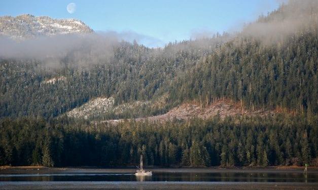 Forest Service chief: agency auditing Alaska region timber program