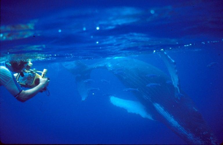Whale song documentary has Alaska premiere in Petersburg - KFSK