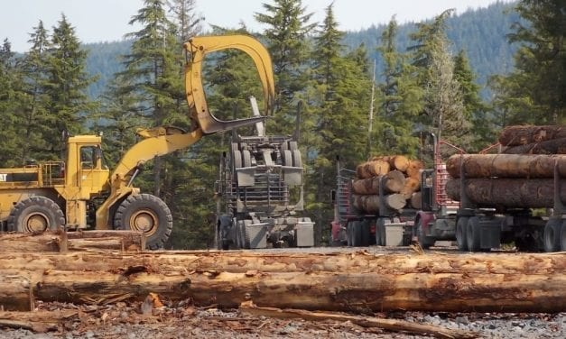 Regional forester expects audit of Tongass logging to be completed soon