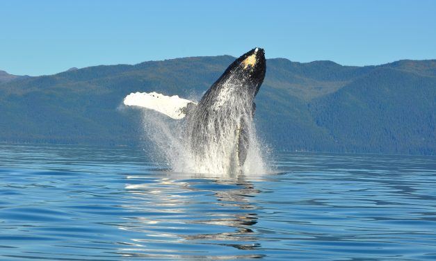 NMFS hearing on designating Southeast Alaska coastline as critical habitat for humpback whales