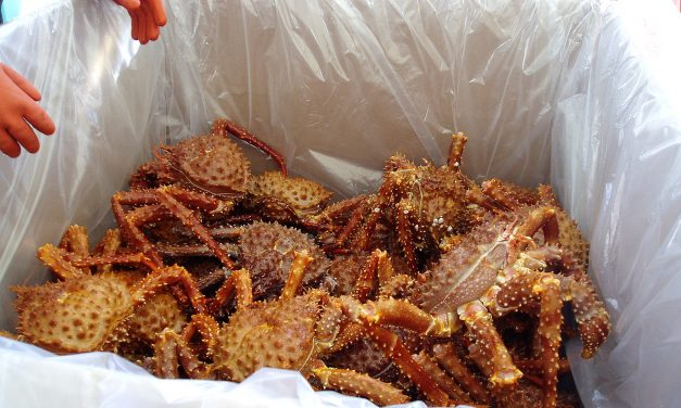 Low harvest goal set in Southeast's limited golden king crab commercial fishery